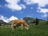Een alpenweide in Oostenrijk