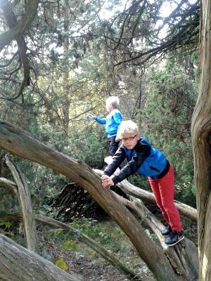 In het bos valt altijd wel wat te klimmen