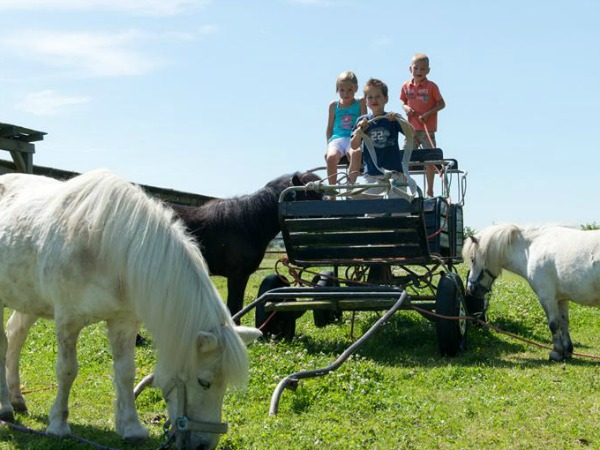 Pony's bij FarmCamps Five Star