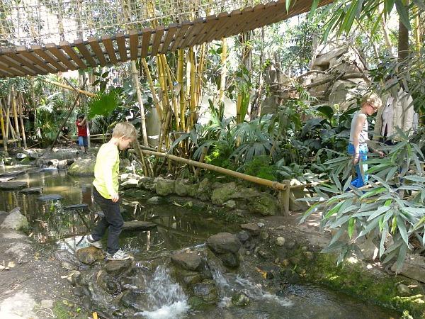 spelen in de jungle dome