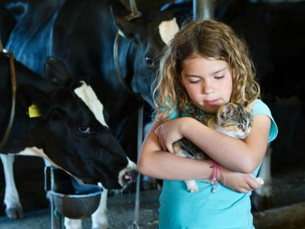 meisje met kitten bij de koeien
