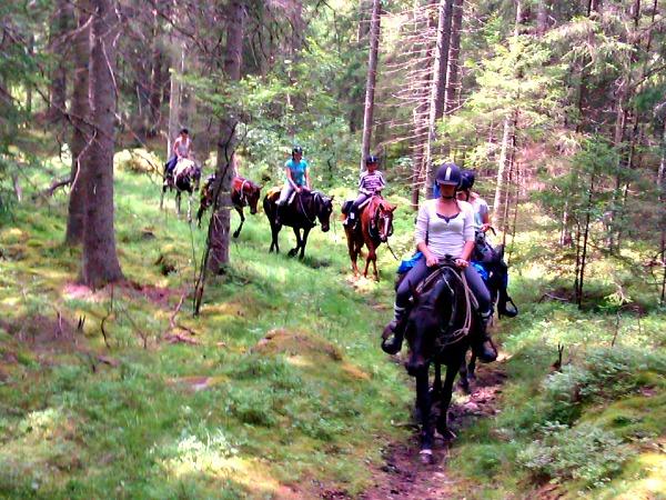 Paardrijtrektocht in Zweden