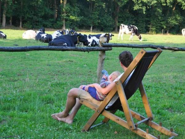 Vader geeft kindje eten met uitzicht op de koeien