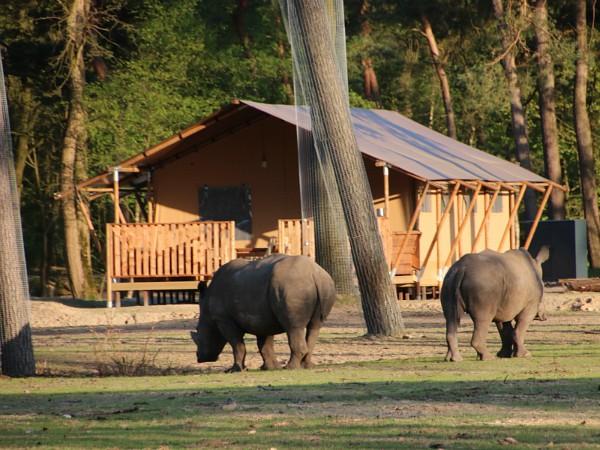 safaritent met neushoorn ervoor