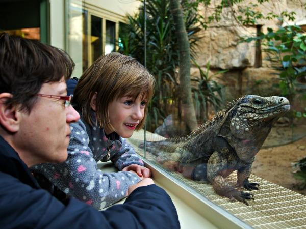Een leguaan in de dierentuin van Praag