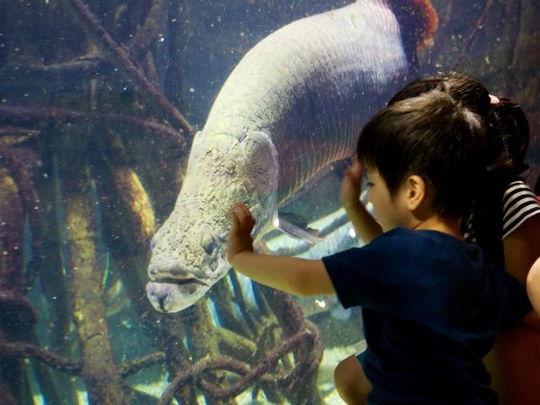 Kinderen kijken hun ogen uit in het Kaiyukan aquarium