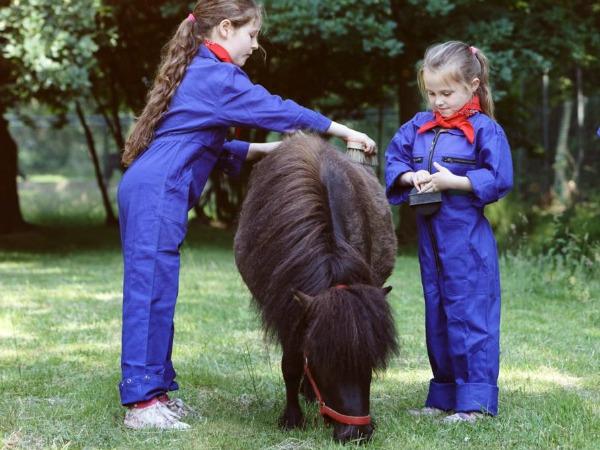 Het verzorgen van pony Zoë