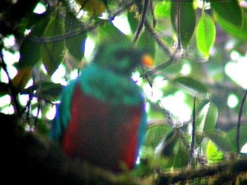 Gespot: de Quetzal!!