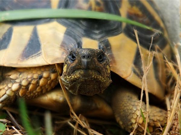 Schildpad in Parc Animalier de Pradinas
