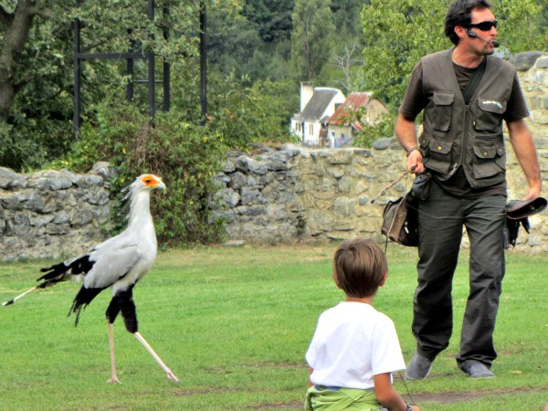 Vogelshow bij Donjon des Aigles