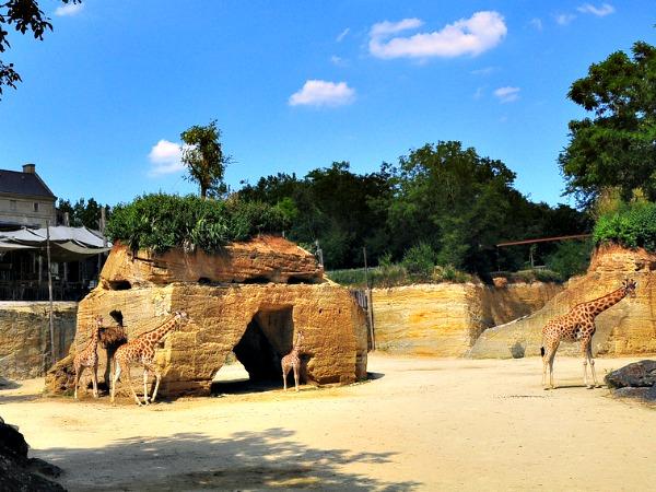 Het giraffeverblijf in de steengroeve van Doué de la Fontaine