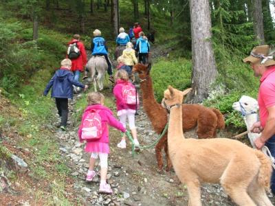 Op stap met de ezels en alpaca's