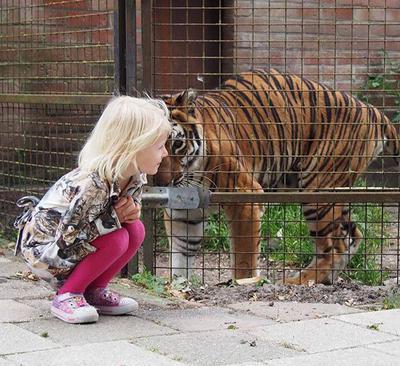 Amaris aan het spelen met haar lievelingstijger Myra