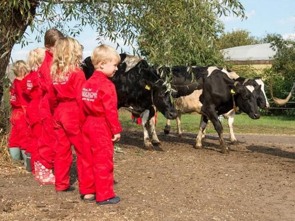 De kids kijken naar de koeien in rode overal