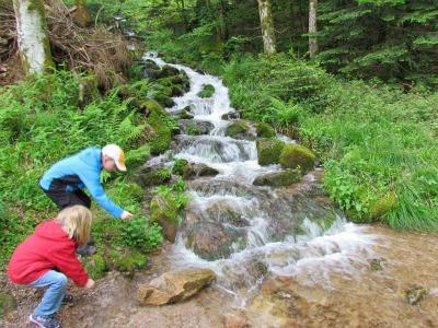Veel beekjes en watervallen in het Zwarte Woud