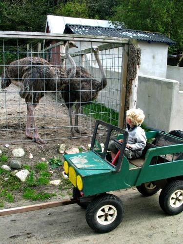 Zeb in de bolderjeep bij Safari zoo park Lindrup