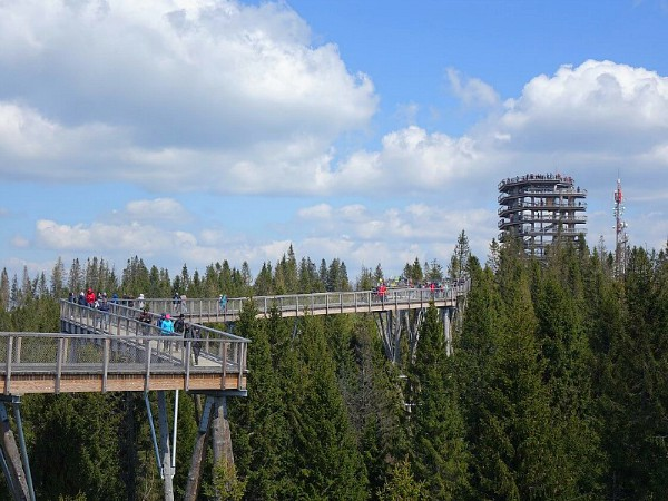 Het boomtoppenpad in National Park Pieniny
