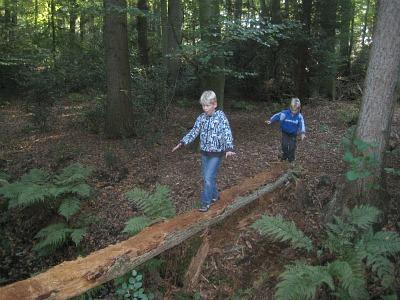 sprietlopen over omgevallen boom