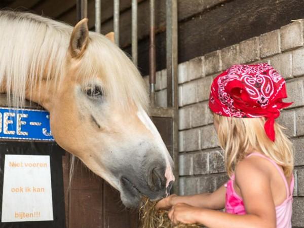 Een meisje voort het paard