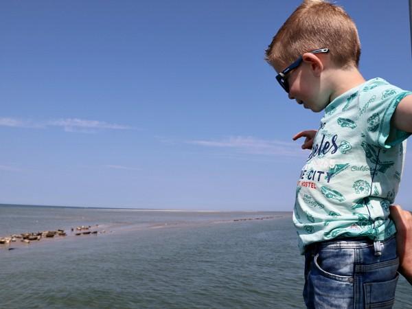 kindje kijkt naar de zeehonden