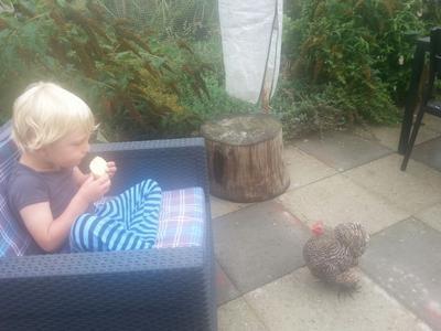 De jongen en de kip