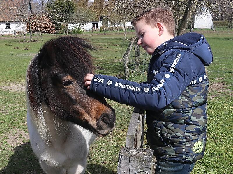 Eén van de twee lieve pony's van De Kleine Wildenberg.