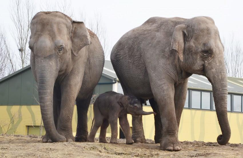 jong olifantje dierenrijk