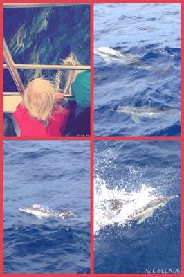 Dolfijnen spotten op de Azoren
