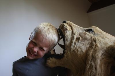 gegrepen door een leeuw