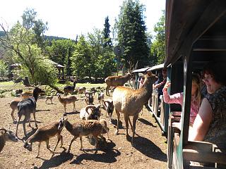 De Eifelzoo is een leuke kleinschalige dierentuin