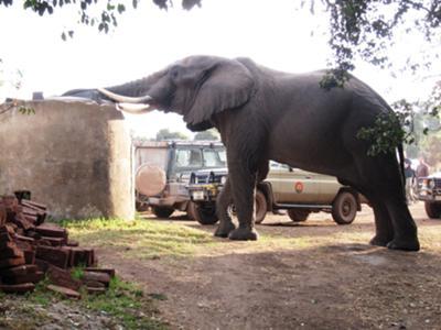 Ngorongoro, Simba Camp (Tanzania)