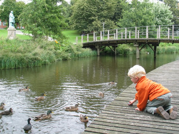 Eendjes voeren in een park in Odense
