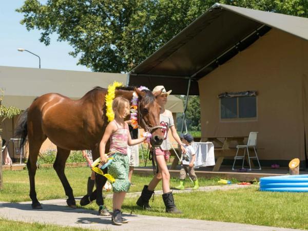 Meisjes met een paard bij de tenten van FarmCamps Breehees