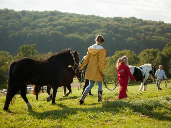 Met de pony's door de heuvels en bossen van Limburg