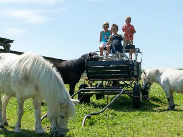 Op de paardenkar bij FarmCamps Five Star