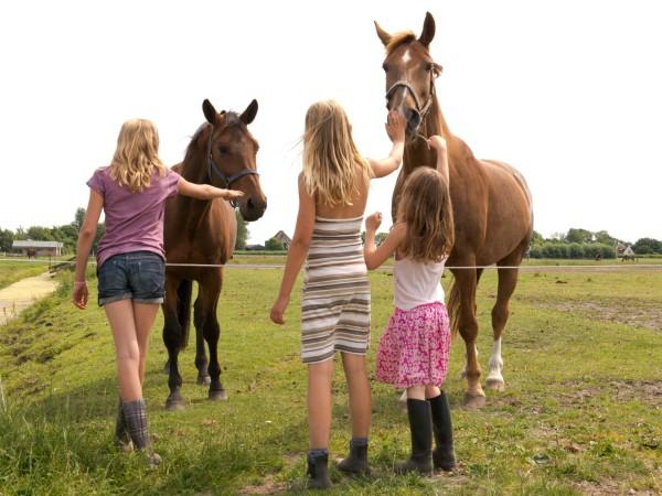 De paarden bij FarmCamps Fleur Stables