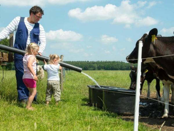 Koeien voeren bij FarmCamps 't Looveld