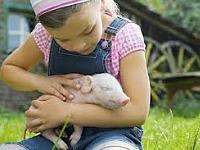 farmcamps knuffelen met konijn