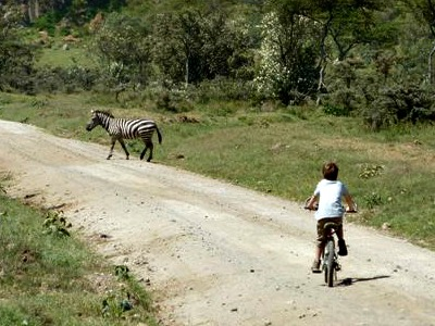Op de fiets zebra's tegenkomen, hoe cool is dat?