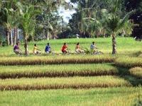 Fietsen door de rijstvelden van Bali