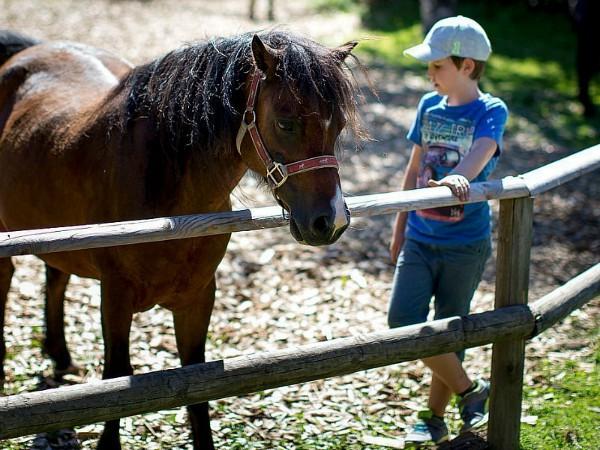een kind staat bij de pony