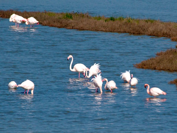 Flamingo's in de Po Delta
