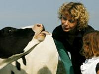 Kennismaken met de koeien bij Hoeve Waterschap