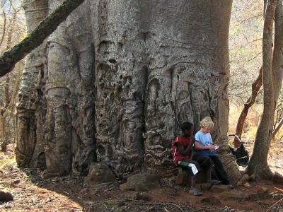 Nieuwe vriendjes maken onder de grote baobab