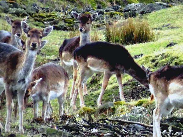 Herten in Wildpark Dülmen