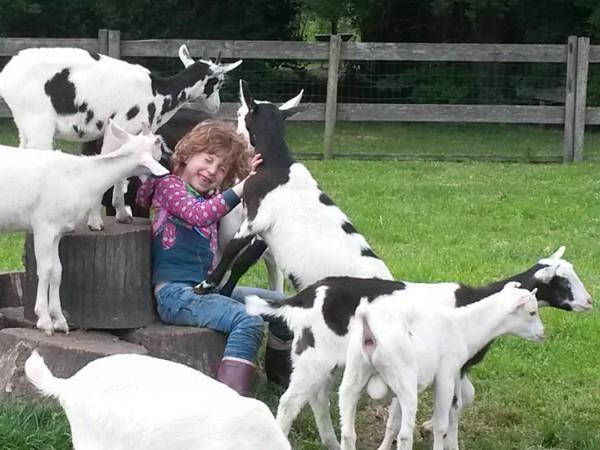 Geiten en meisje bij Boerenbed Boerderij