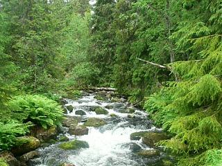prachtig Zweedse natuur