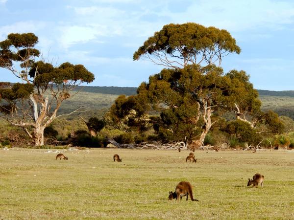 Kangaroo Island in South Australia
