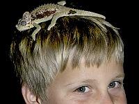 Hoe cool, een kameleon op je hoofd!