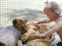 Leeuwtjes aaien in Namibië